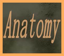 Anatomy Definition, Jobs, Career, Scope, Tips, Salary & Nature of Work