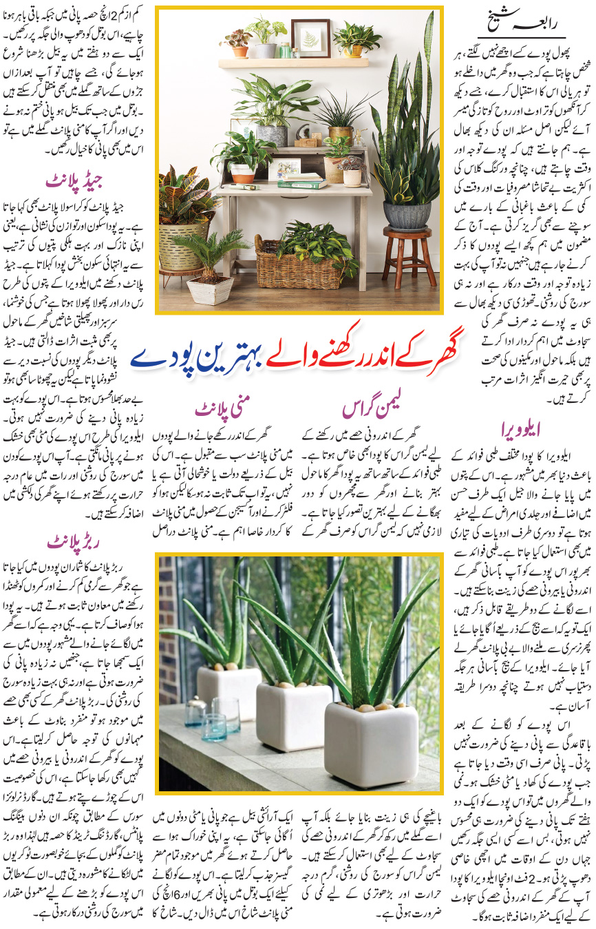 Best Indoor Plants, Benefits, Tips (Intro in Urdu & English)