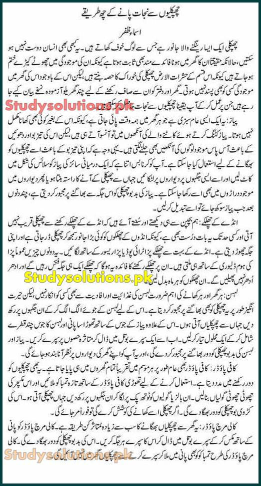 How to Get Rid of Lizards at Home? Lizard Control Tips in Urdu & English