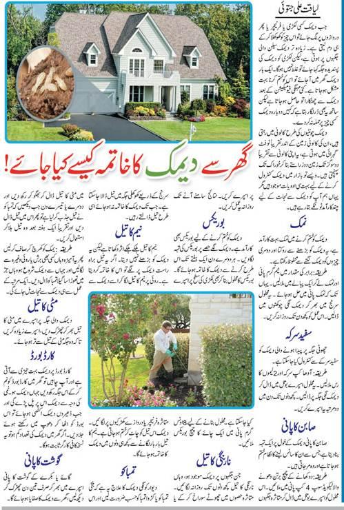 Top 10 Natural Methods for Termite Control (Urdu-English)
